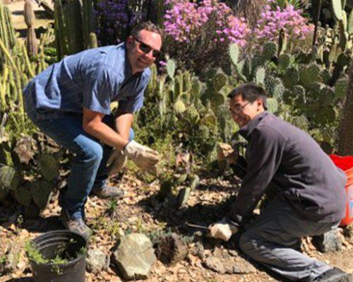 Working in the Arizona Garden